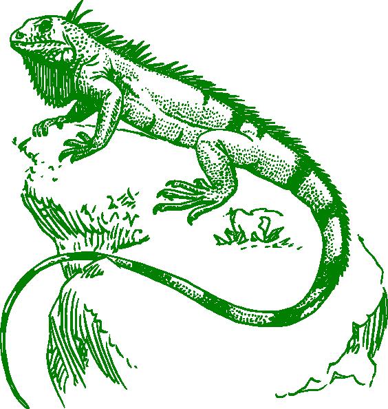 Iguana clipart outline. Clip art at clker