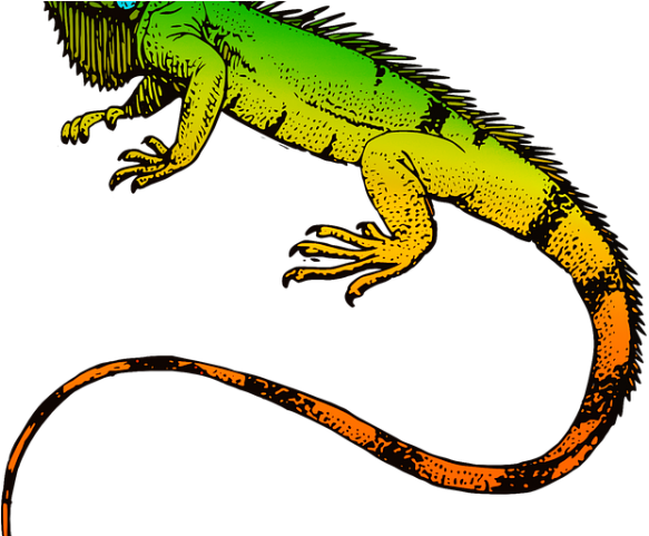 Png download full size. Iguana clipart rainforest animal