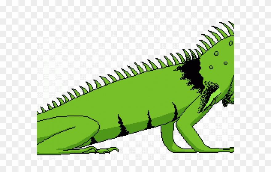 Lizard png download . Iguana clipart yellow green