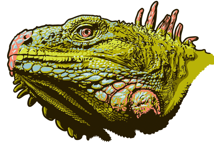Chuck regan words pictures. Iguana clipart yellow green
