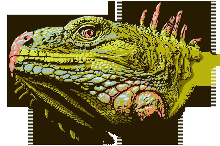 Chuck regan words pictures. Iguana clipart yellow green