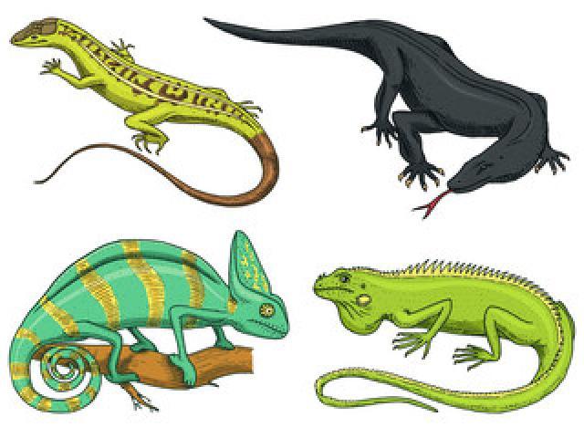 Iguana clipart yellow green. Spotted lizard x