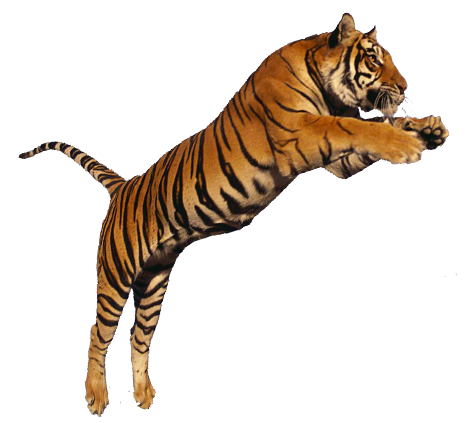 Images png. Image tiger jumping transparent