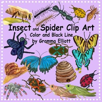 Inchworm clipart addition subtraction. Insect and bugs spider