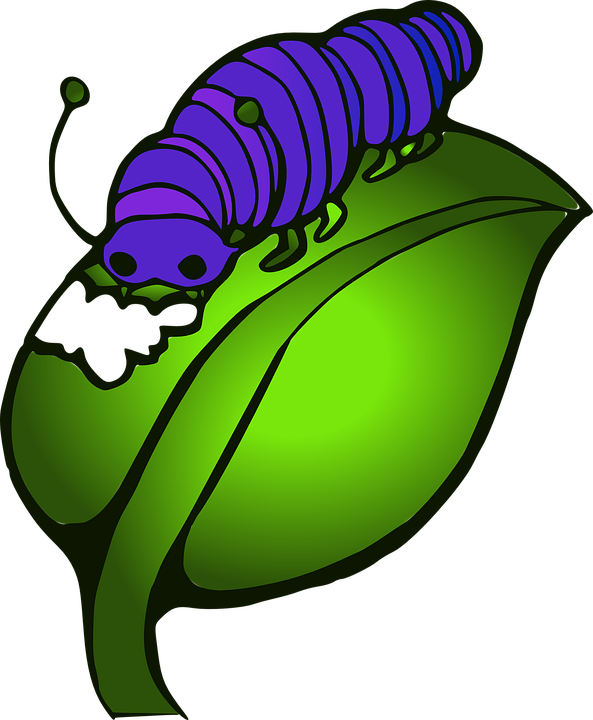Inchworm ulat free on. Worm clipart catapiller