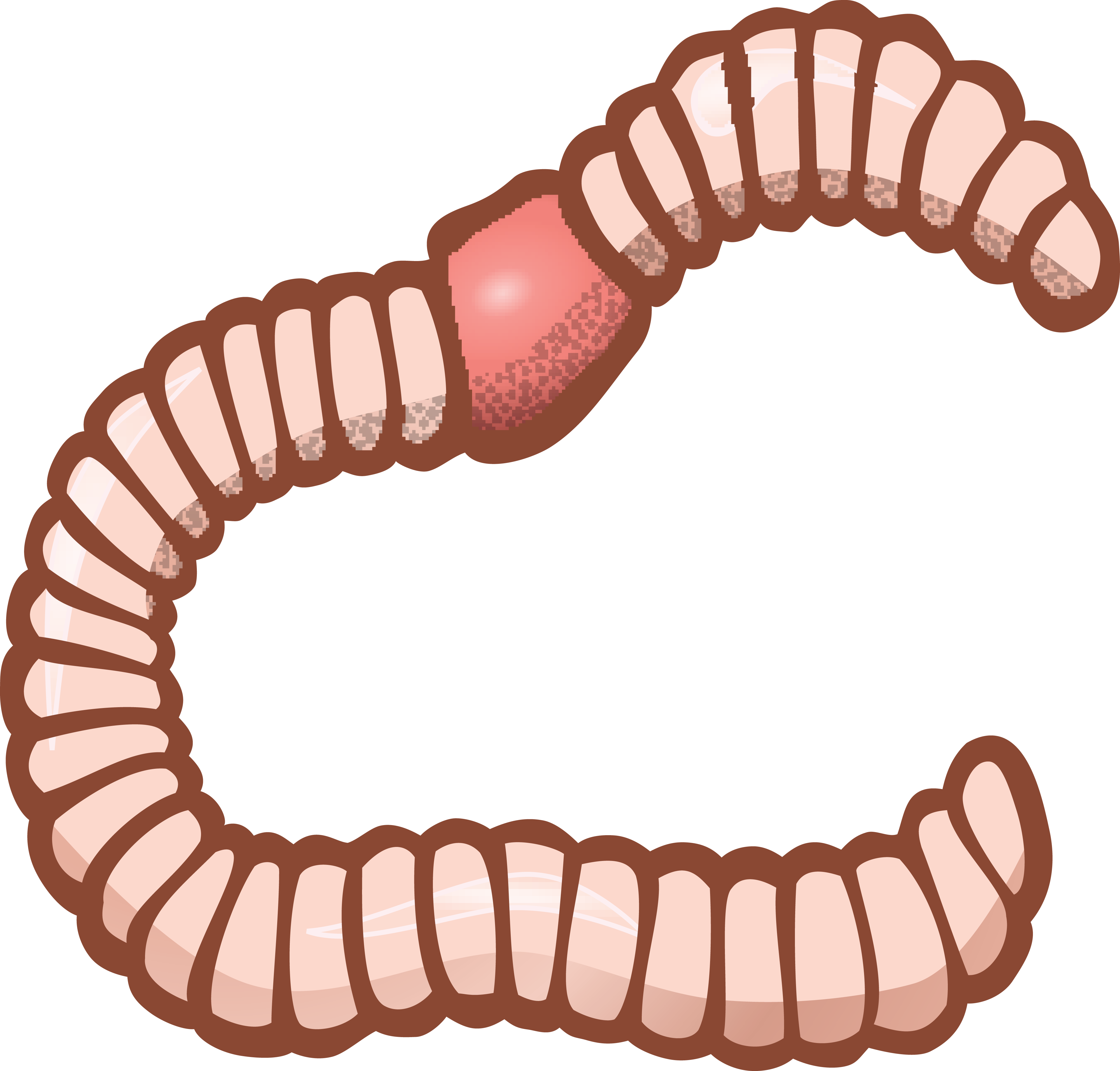 collection of transparent. Worm clipart stomping