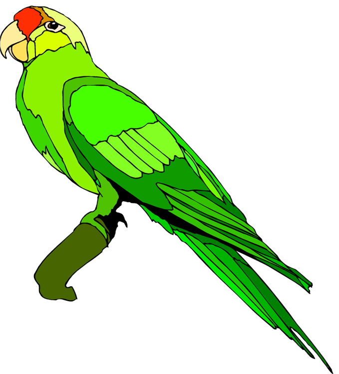 Indian Clipart parrot
