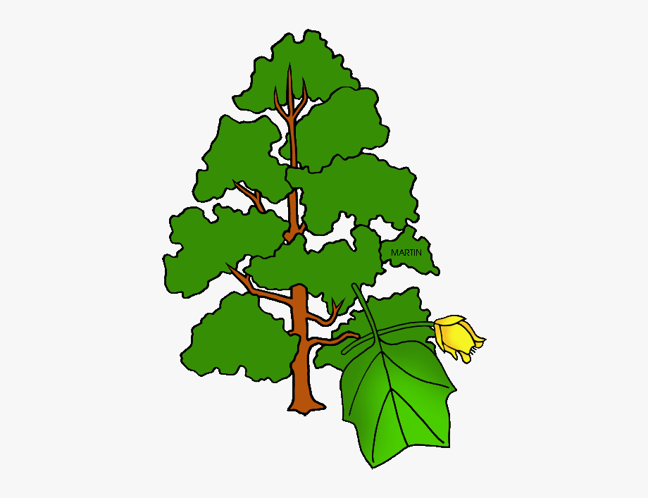 Indiana clipart simple. State tree drawing