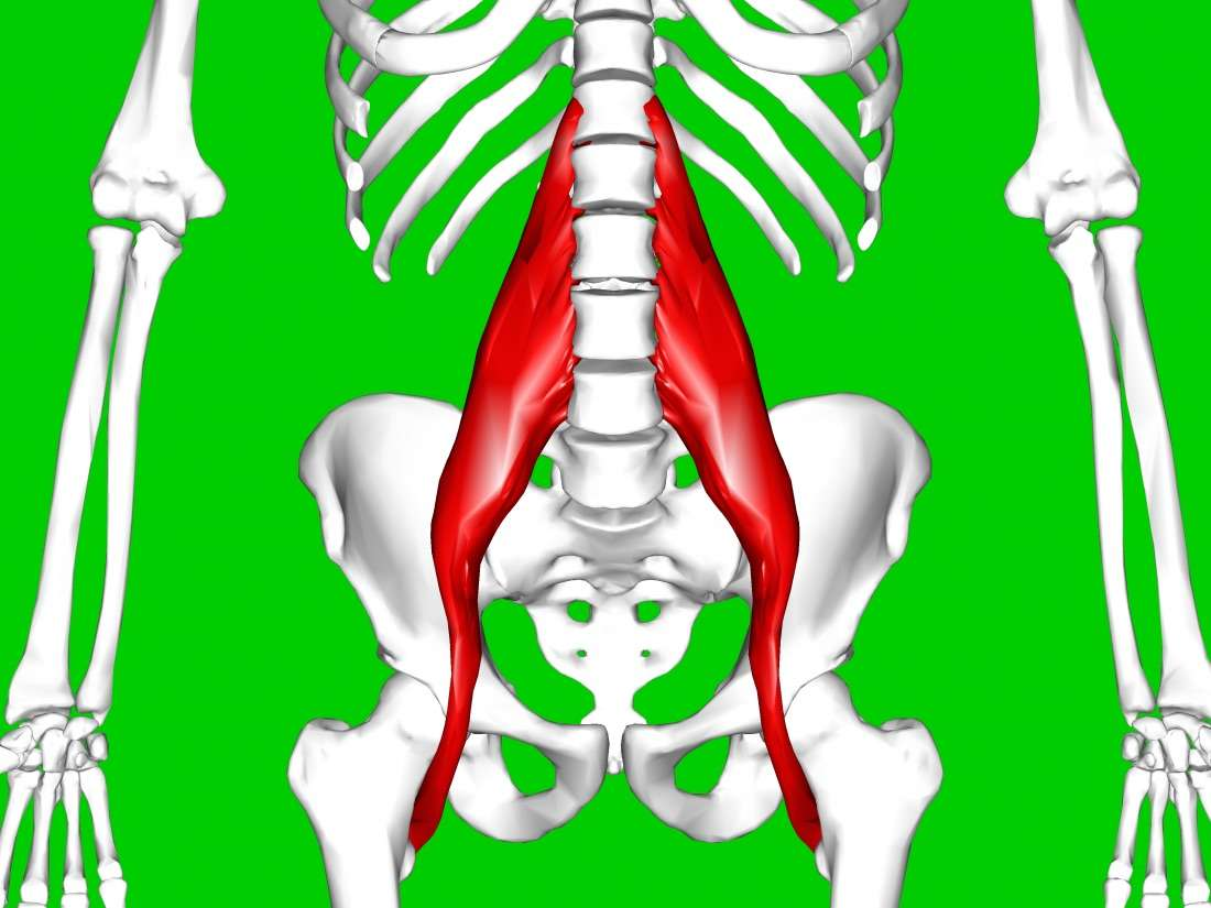 Hip flexor symptoms causes. Injury clipart muscle strain