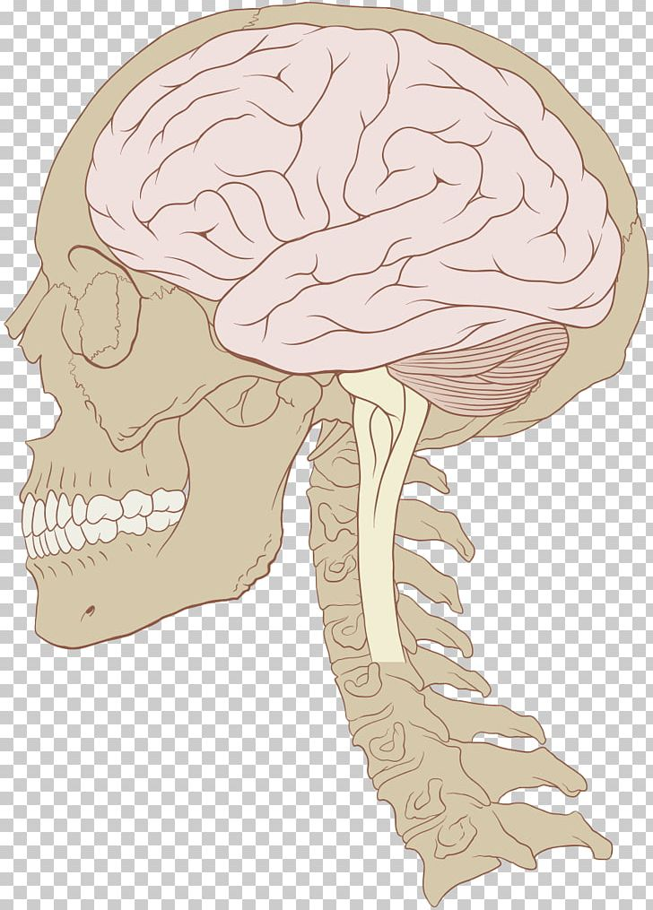 Injury clipart symptom. Concussion traumatic brain second
