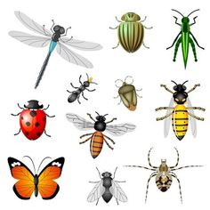 Insect clipart beneficial insect. All insects clip art