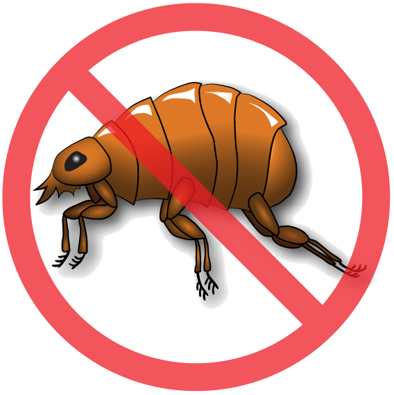 advantages of nematodes. Insect clipart beneficial insect