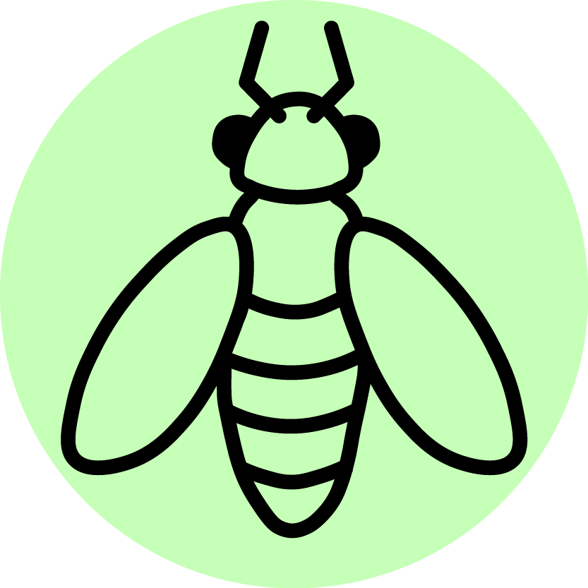 Insect clipart beneficial insect. Extension uw entomology spotted