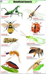 best insects images. Insect clipart beneficial insect