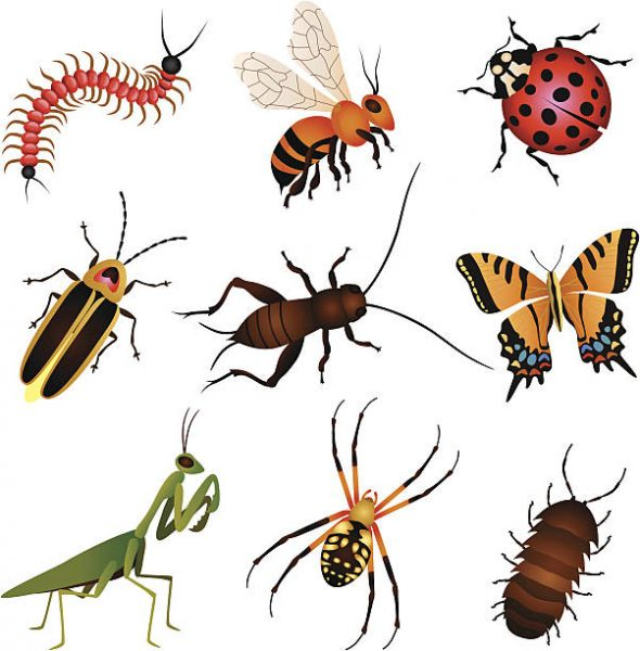 Insect clipart beneficial insect. Insects in the garden
