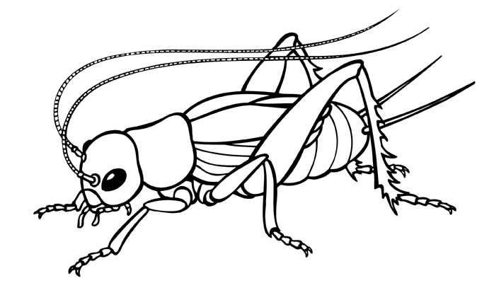 Insects clipart black and white. Free bug cliparts download