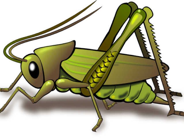 insect clipart borders