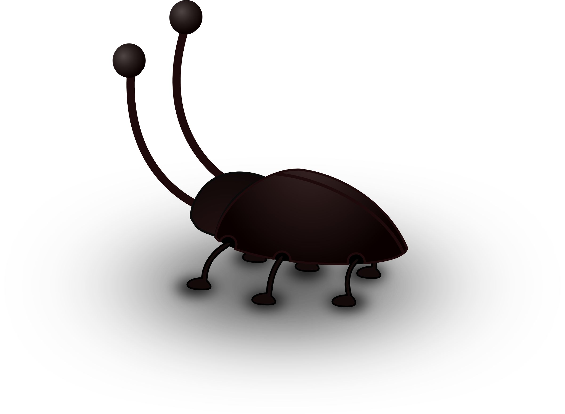 Insect clipart bug. Bugs big black cockroach