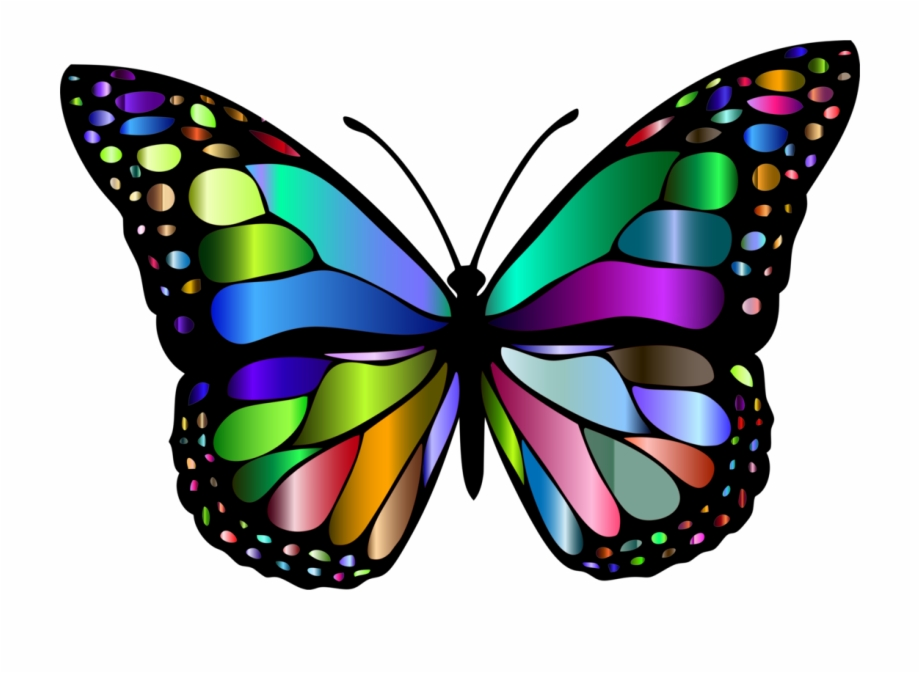 Insect clipart butterfly. Butterflies insects a free