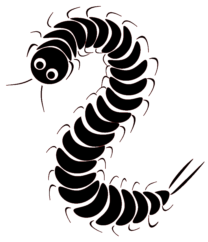 Image png girls und. Insects clipart centipede