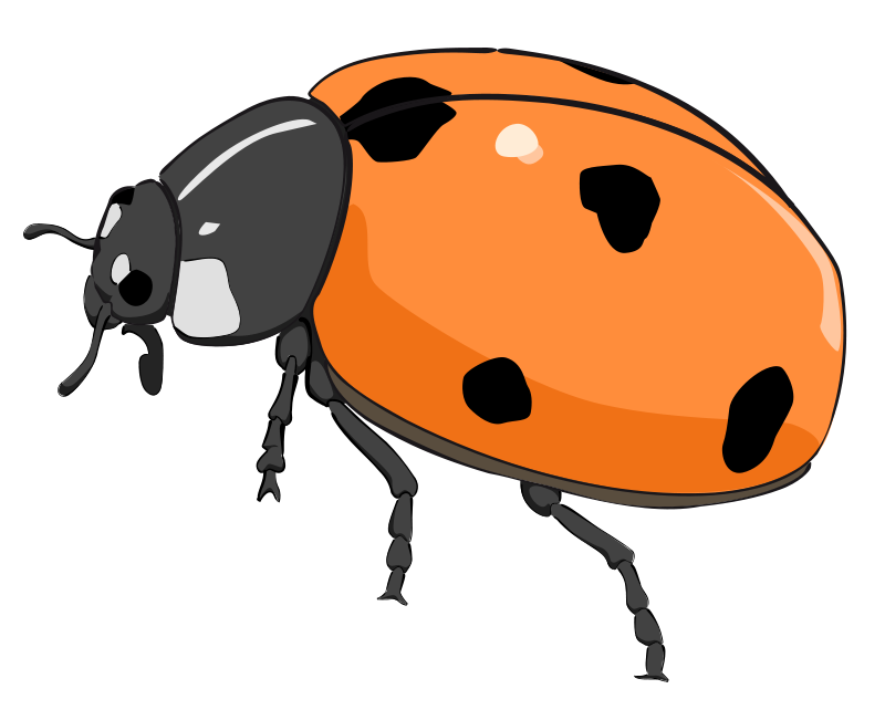 Cicada panda free images. Worm clipart cool
