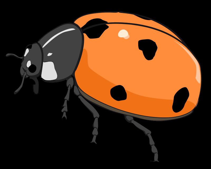 Cicada panda free images. Ladybugs clipart branch
