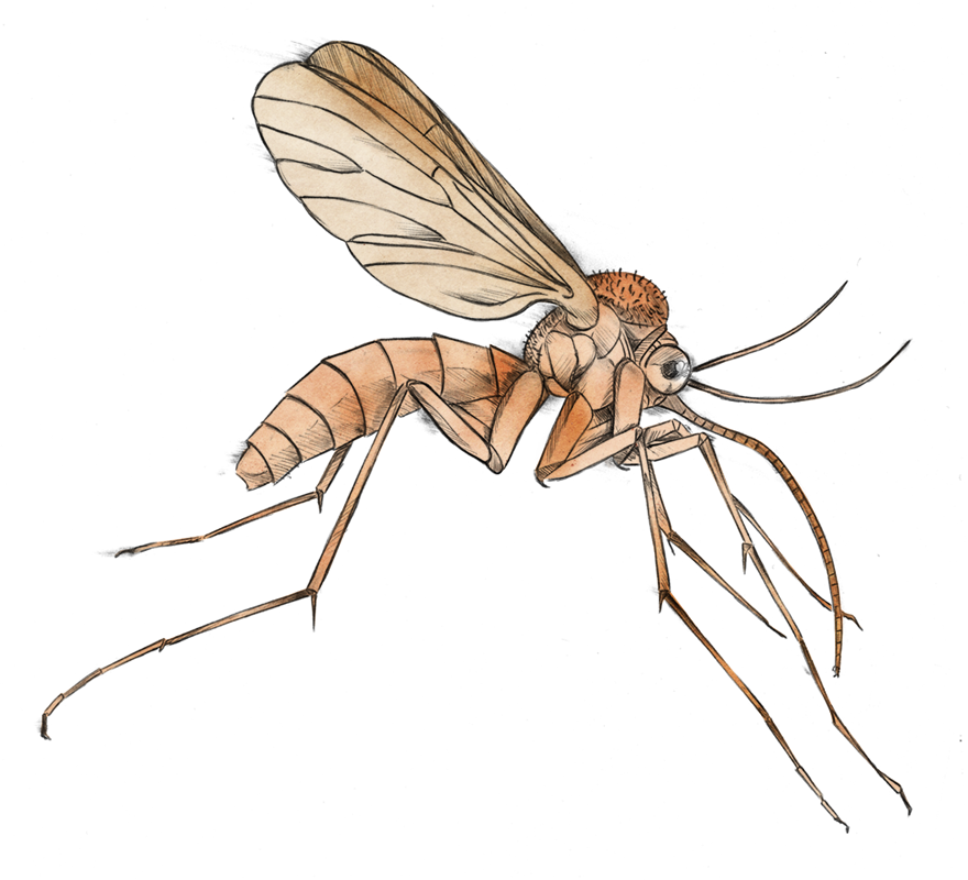 Mosquito free download best. Insect clipart cute vector