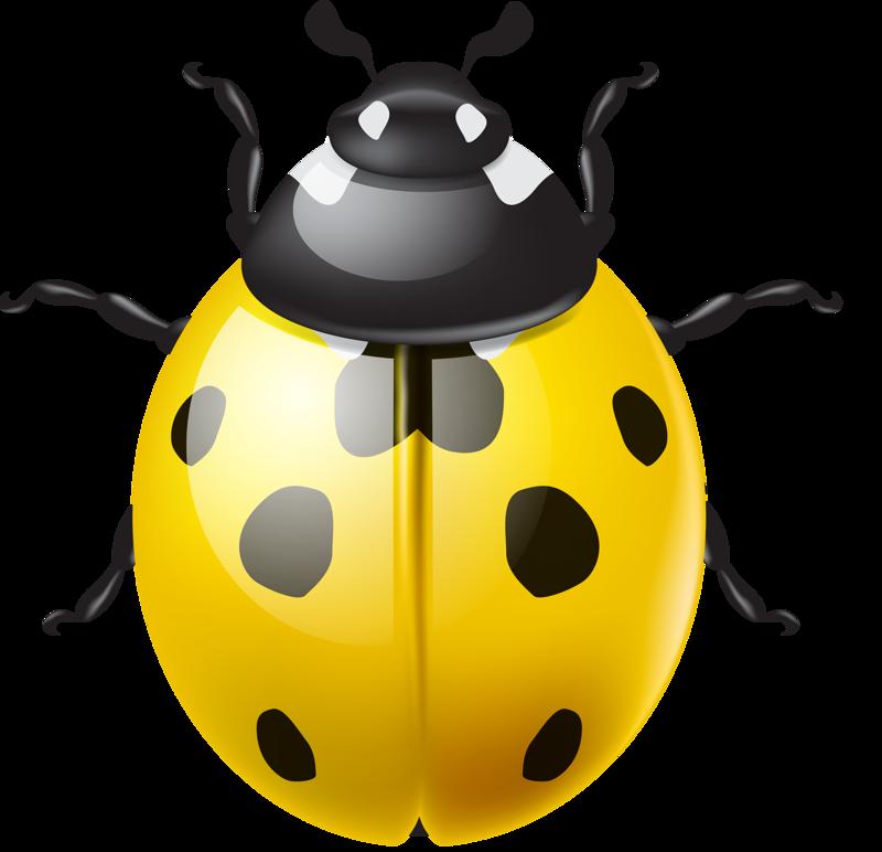Ladybugs clipart yellow ladybug. Shutterstock png lady bugs