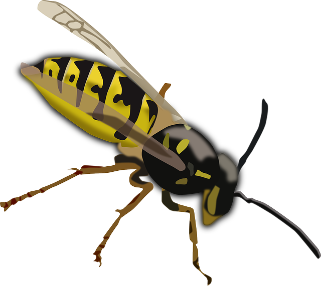 Free pictures images found. Insect clipart dead insect
