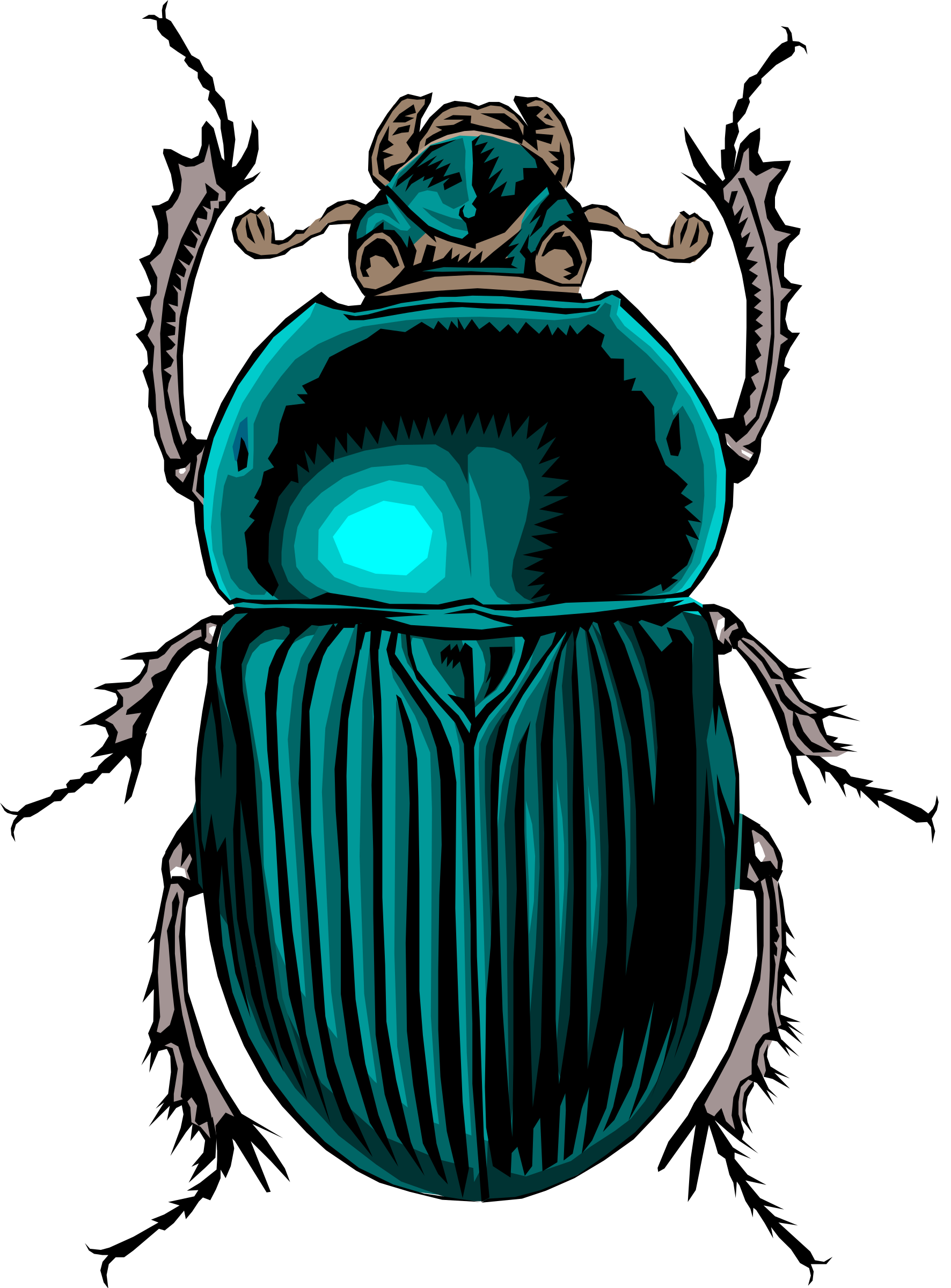Insect clipart desert insect. Scarabe big image png