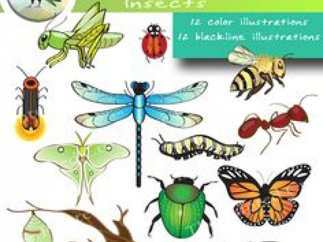 Insect clipart desert insect. Free download clip art