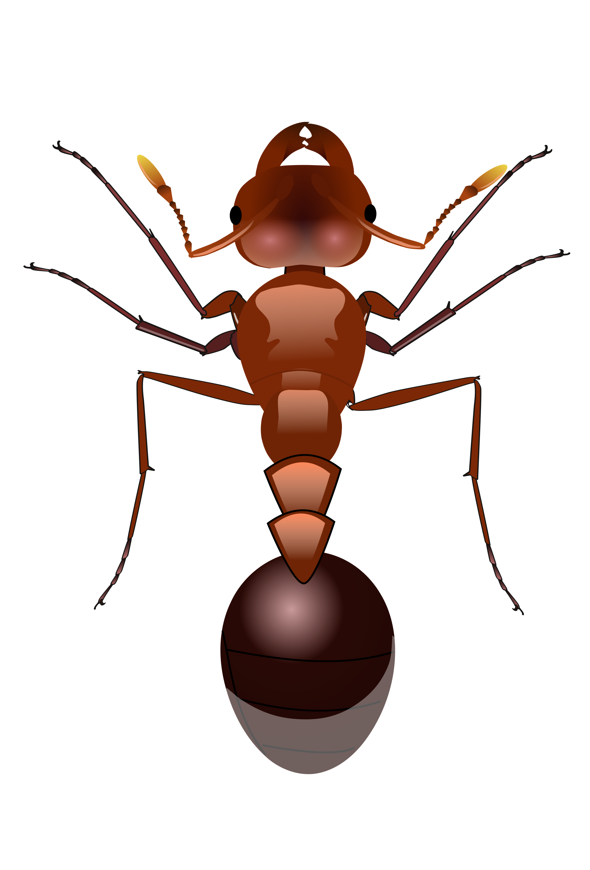 Insects clipart fire ant. Ants png images free