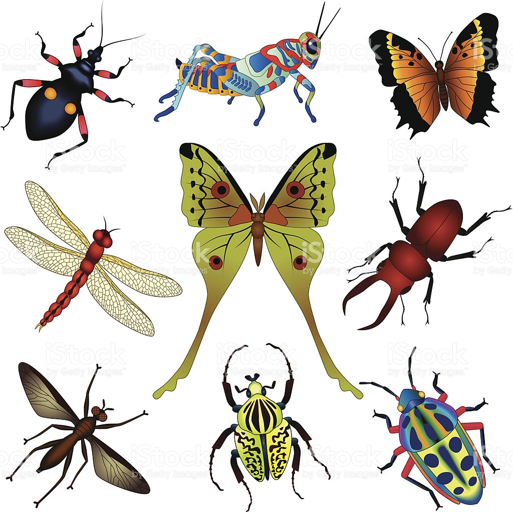 Insect clipart jungle. Collection of rainforest free
