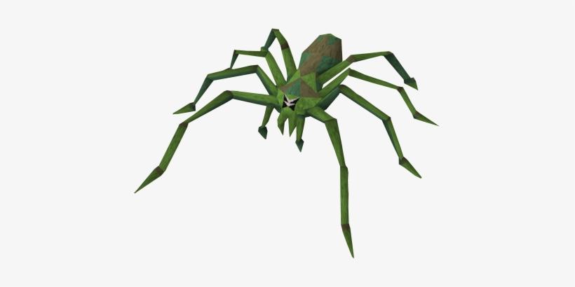 Insect clipart jungle. Tarantula rainforest spider png