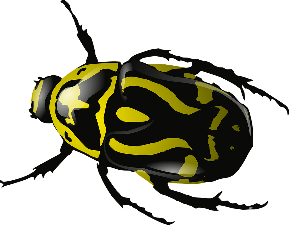 Png and bugs transparent. Insects clipart light bug