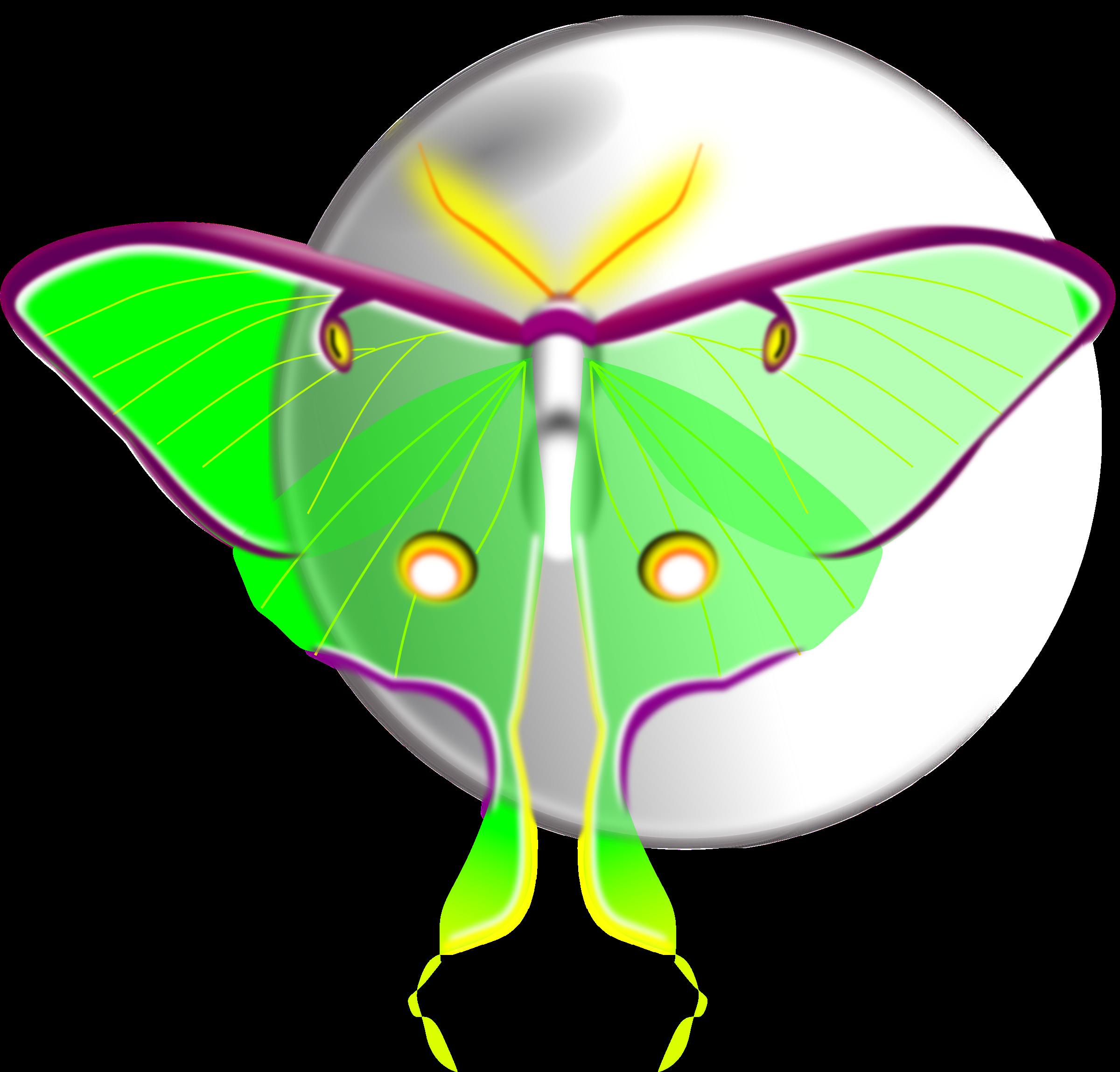 Luna. Moth clipart transparent