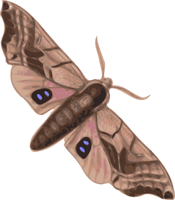 Moth clipart gypsy moth. Top view cartoon free