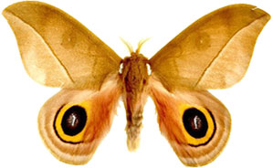 Free insect animations gifs. Moth clipart animated