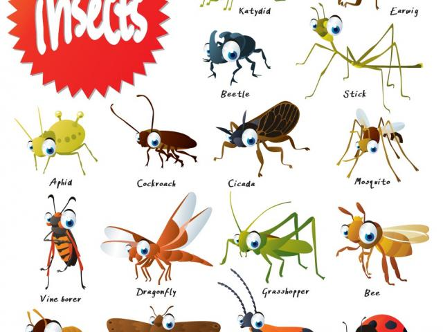 Insects clipart name. Free insect download clip