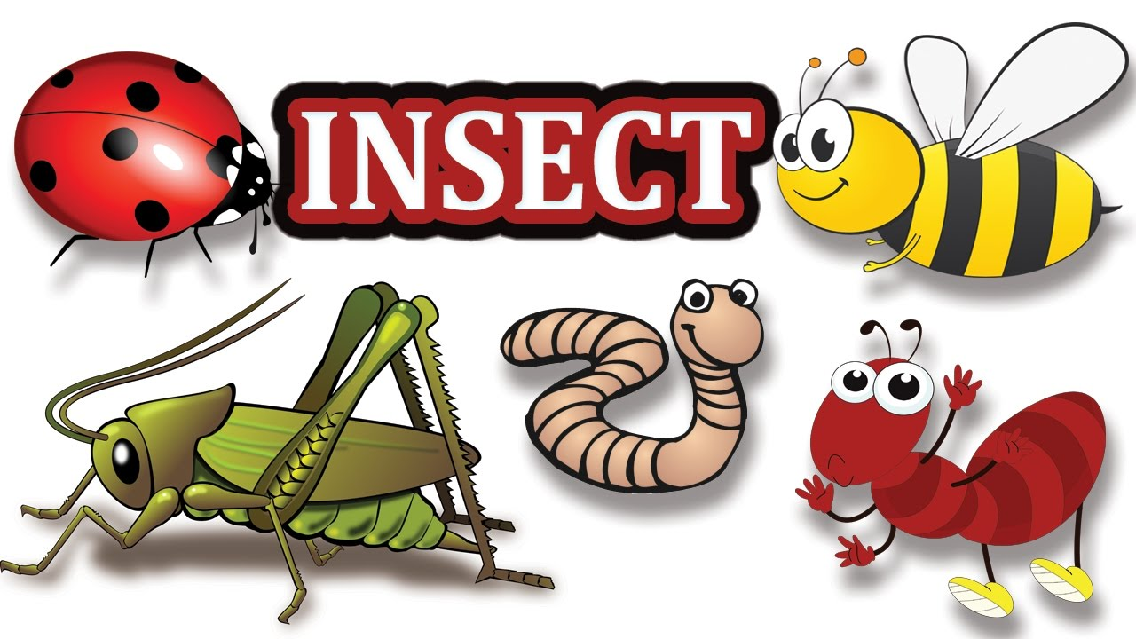 insects clipart name