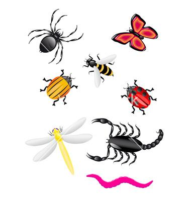 Rainforest clipart rainforest insect. Free download