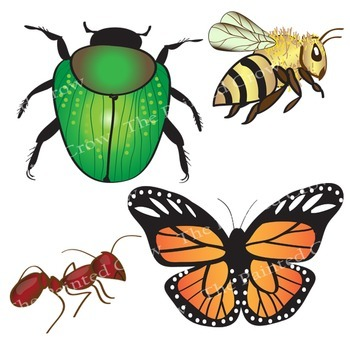 Clip art bug piece. Insect clipart realistic