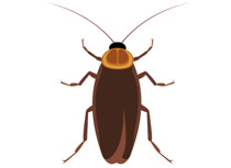 Free clip art pictures. Insect clipart realistic