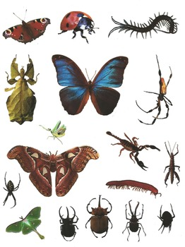 Insect clipart realistic. Bugs galore commercial photo
