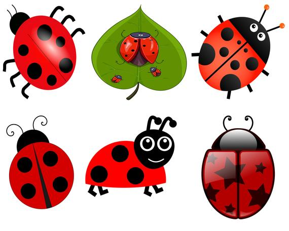 Clip art insect lady. Ladybugs clipart red ladybug