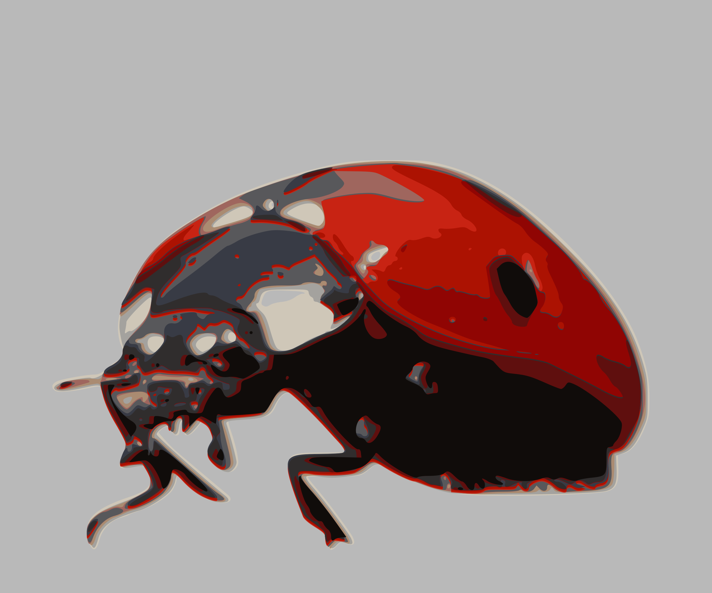 Insects clipart scarab beetle. Ladybird big image png