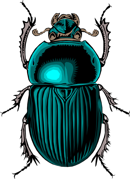 Insects clipart scarab beetle. Dung png transparent images