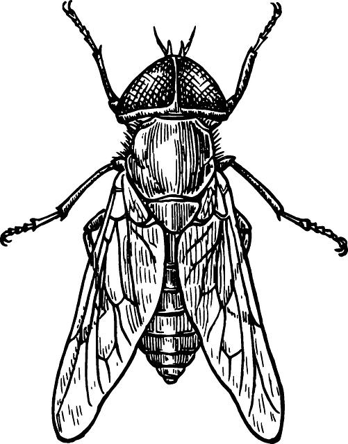 Gambar gratis di pixabay. Insect clipart serangga