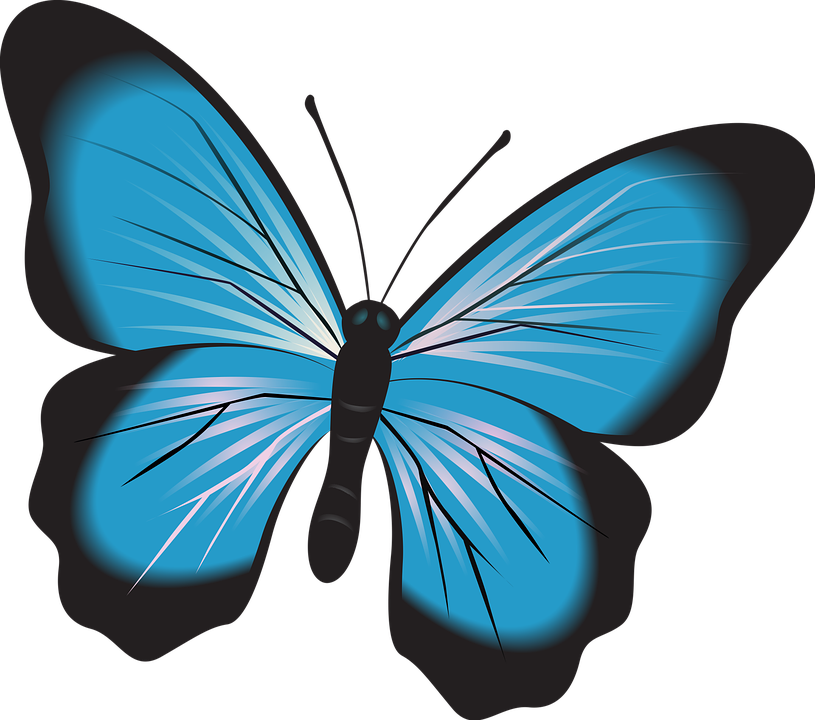 Free on dumielauxepices net. Insect clipart serangga