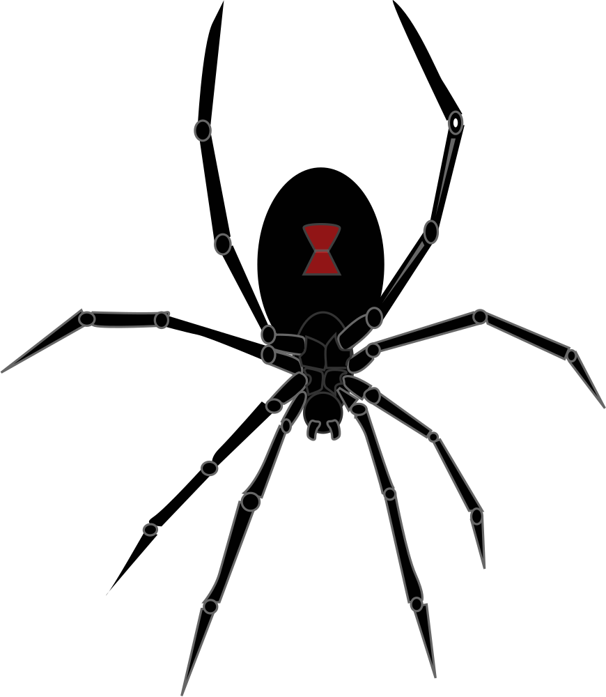 Onlinelabels clip art black. Insect clipart spider